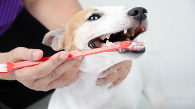 pet microchipping facts from soundview veterinary hospital in tacoma wa